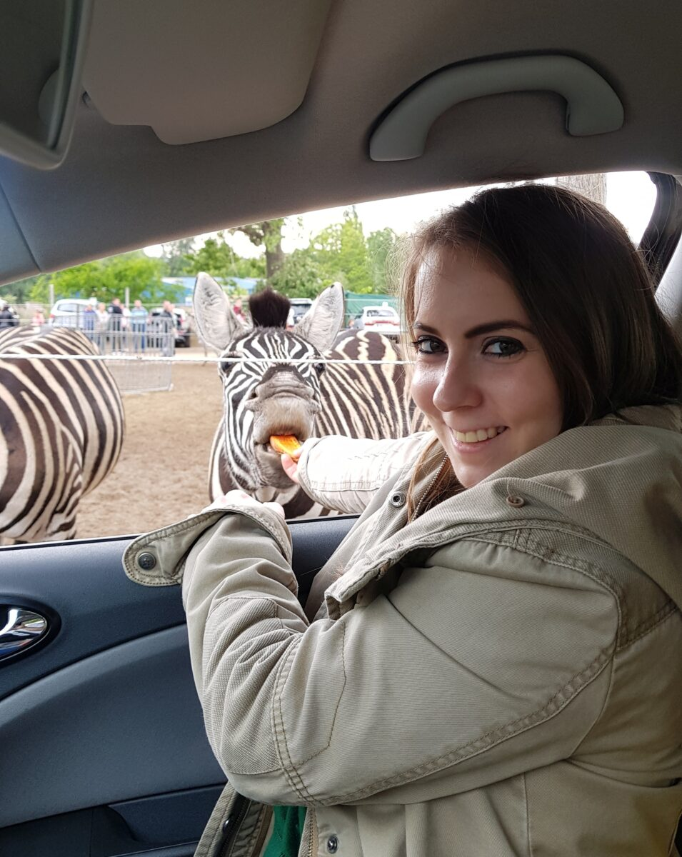 Safari park Szada zebra feeding